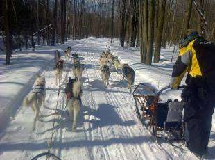 Green Feet Dogsledding