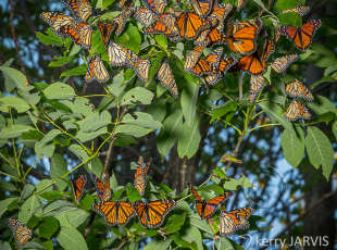 Monarch Roost in Southampton